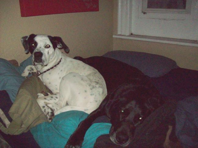 Otis pretty much nestling on top of Yaz.