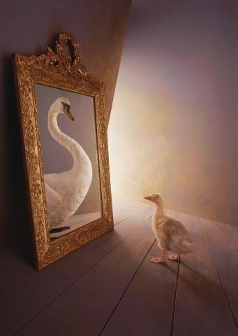 animal,swan,mirror,changling,beauty,change-e6aea1f380ed9eb693a62ffe8c692819_h